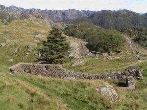 Brakke. Bildedato: 3. september 2000