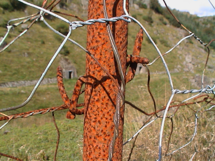 Piggtrådstolpe, Bildedato: 3. september 2000